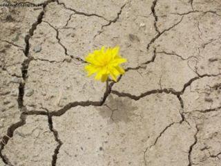 ¿Qué significa ser resiliente?