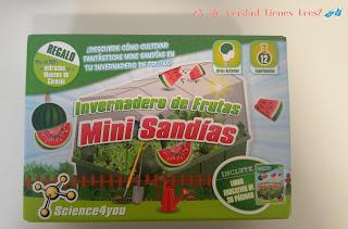Cultivamos mini sandías con los invernaderos de Science 4 you. ¡Y con sorteo!