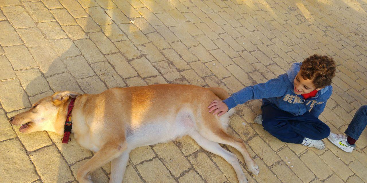Un perro…Tu vida. El perro de terapia.