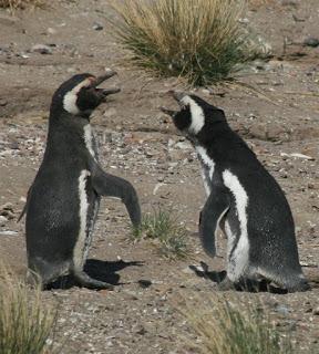 Discusiones entre hermanos: rozando lo absurdo