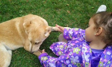 Autismo y perros como mascota: beneficios.